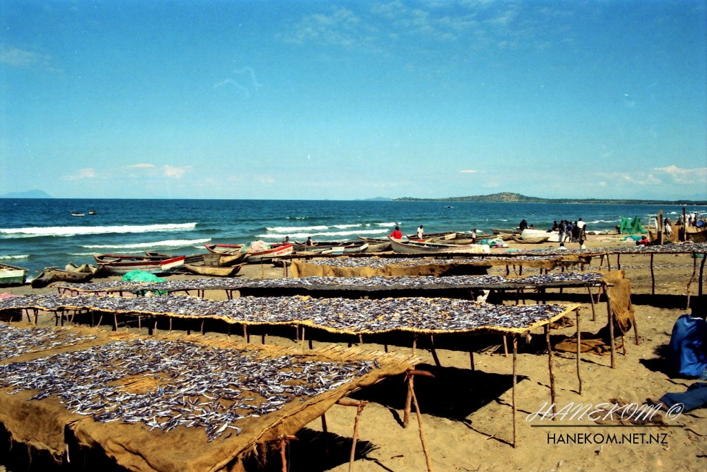 Lake sardines being dried, Senga, Malawi